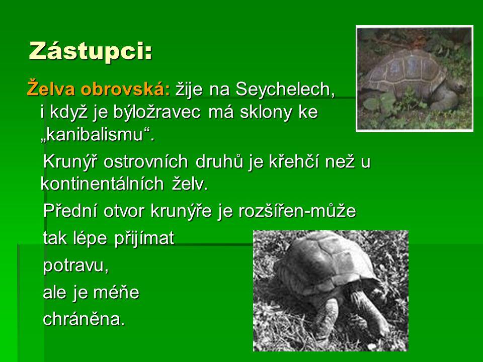 """Zástupci: Želva obrovská: žije na Seychelech, i když je býložravec má sklony ke """"kanibalismu"""". Želva obrovská: žije na Seychelech, i když je býložrave"""
