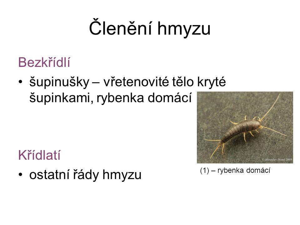 Členění hmyzu Bezkřídlí šupinušky – vřetenovité tělo kryté šupinkami, rybenka domácí Křídlatí ostatní řády hmyzu (1) – rybenka domácí