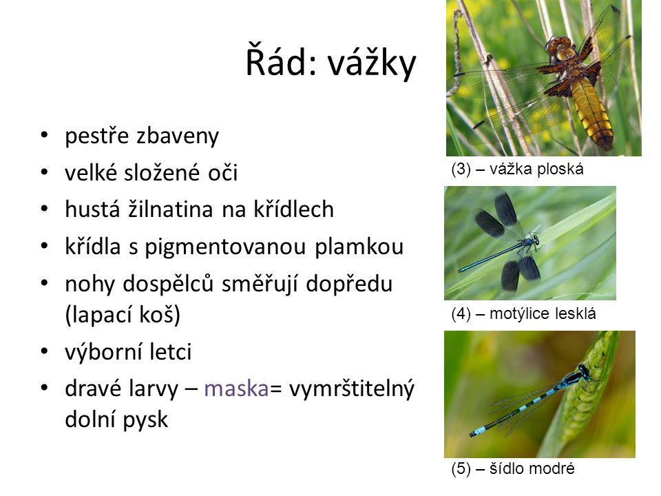 Řád: vážky pestře zbaveny velké složené oči hustá žilnatina na křídlech křídla s pigmentovanou plamkou nohy dospělců směřují dopředu (lapací koš) výbo