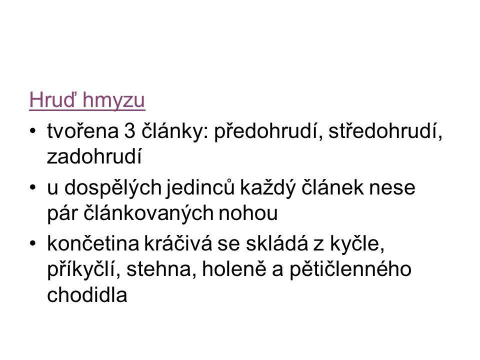 Zdroje Obrázky 1.Deml, Miroslav.Obrázek: Biolib. Web Biolib.