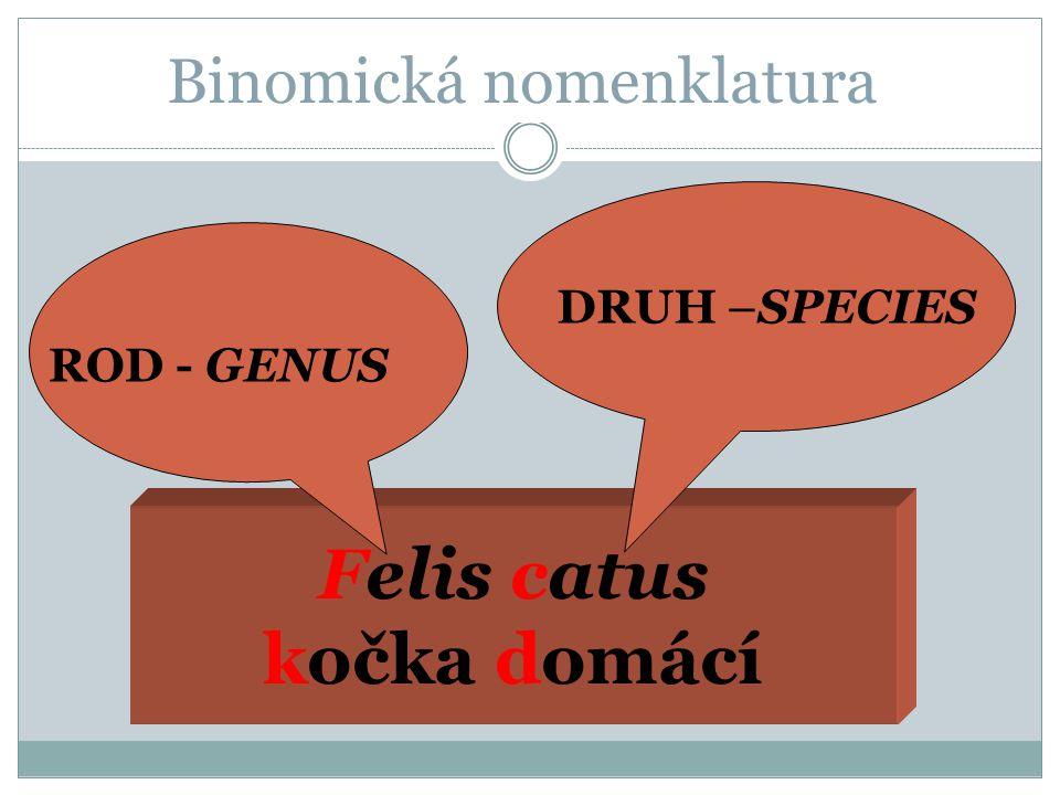 Binomická nomenklatura Felis catus kočka domácí ROD - GENUS DRUH –SPECIES