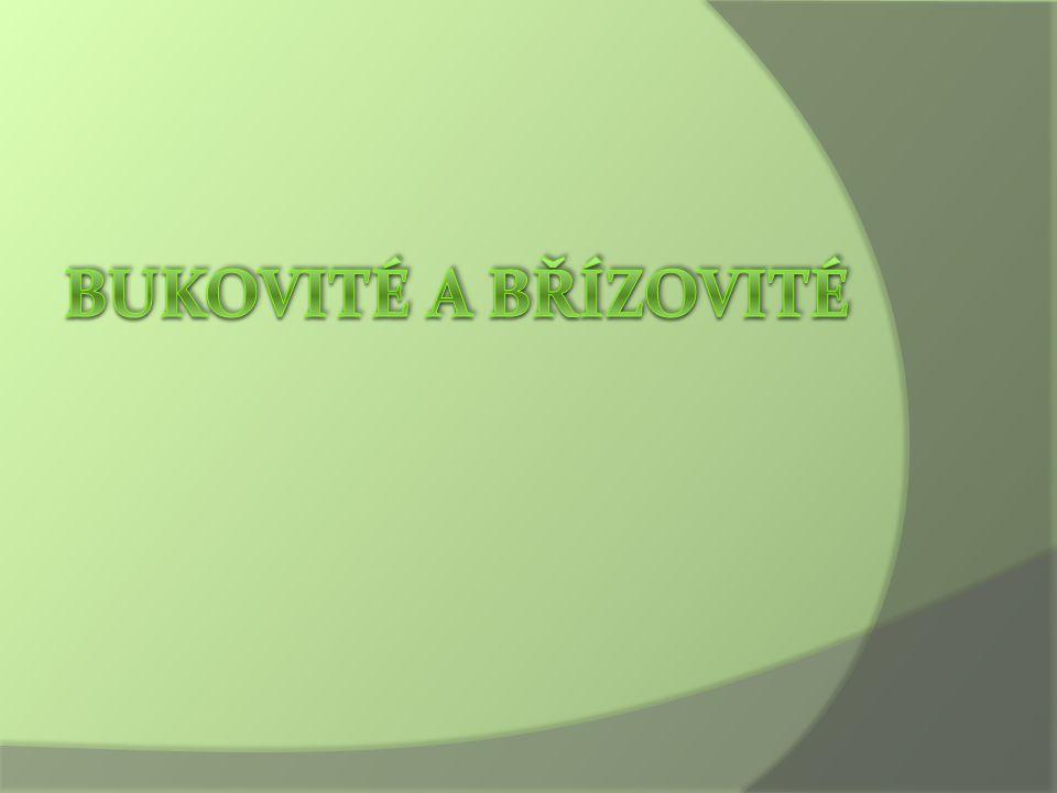 Zástupci – Líska obecná  Corylus avellana  rozložitý keř vysoký obvykle 3 – 8m  listy střídavé, mírně chlupaté, vejčité až kulaté s hrotem na konci, okraje - dvojitě pilovité  samčí květy - 3-7cm dlouhé jehnědy, Samičí květy - nenápadné pupence s malou vyčnívající fialovočervenou bliznou  plody – hnědé oříšky