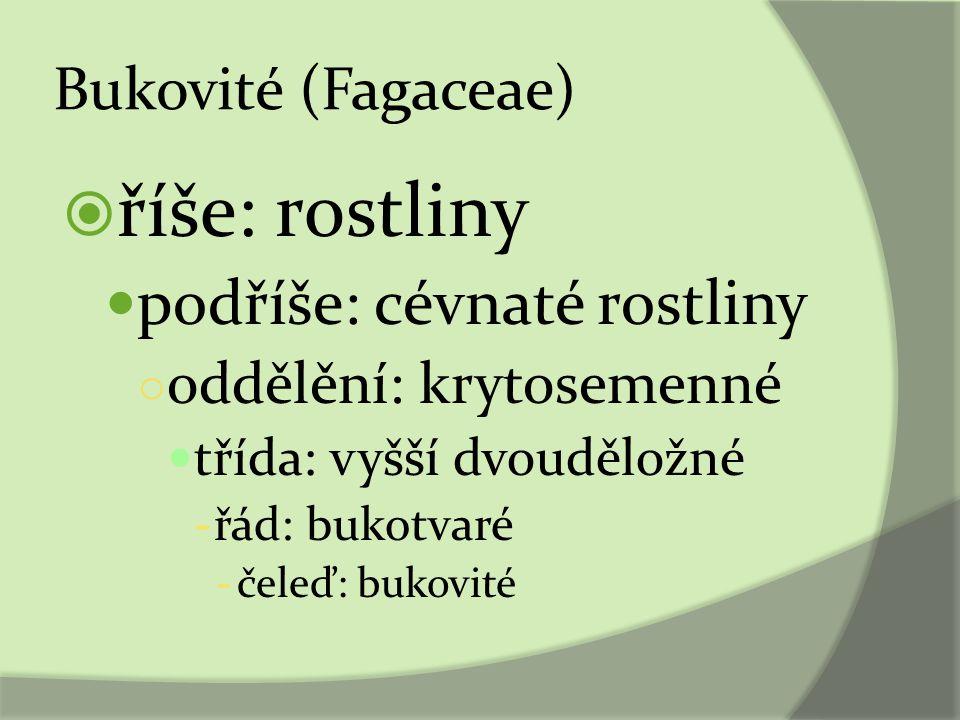 Bukovité (Fagaceae)  říše: rostliny podříše: cévnaté rostliny ○ oddělění: krytosemenné třída: vyšší dvouděložné - řád: bukotvaré - čeleď: bukovité