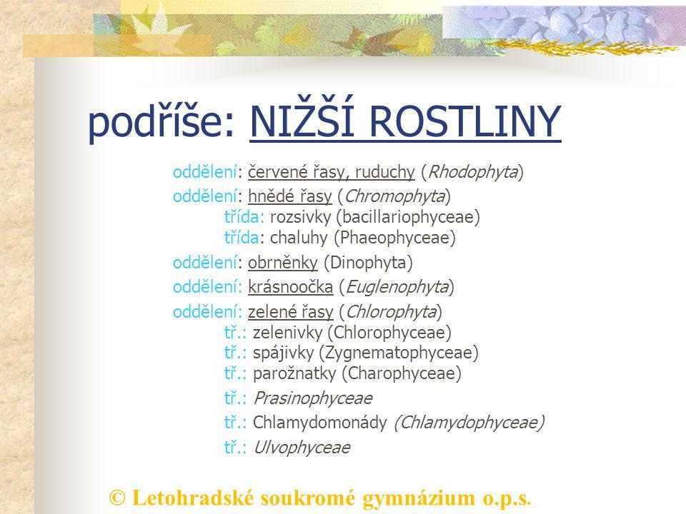 © Letohradské soukromé gymnázium o.p.s. podříše: NIŽŠÍ ROSTLINY oddělení: červené řasy, ruduchy (Rhodophyta) oddělení: hnědé řasy (Chromophyta) třída: