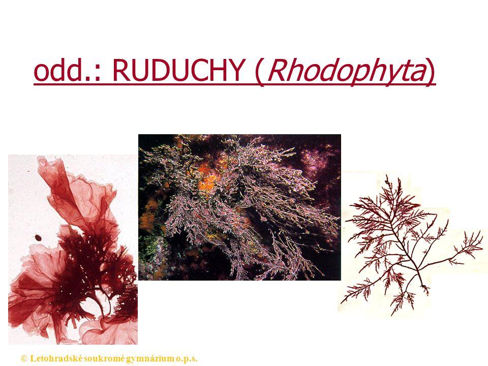 © Letohradské soukromé gymnázium o.p.s. odd.: RUDUCHY (Rhodophyta)