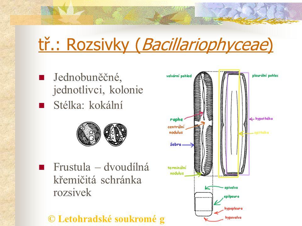 © Letohradské soukromé gymnázium o.p.s. tř.: Rozsivky (Bacillariophyceae) Jednobuněčné, jednotlivci, kolonie Stélka: kokální Frustula – dvoudílná křem