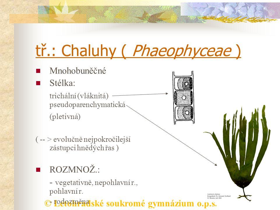 © Letohradské soukromé gymnázium o.p.s. tř.: Chaluhy ( Phaeophyceae ) Mnohobuněčné Stélka: trichální (vláknitá) pseudoparenchymatická (pletivná) ( --