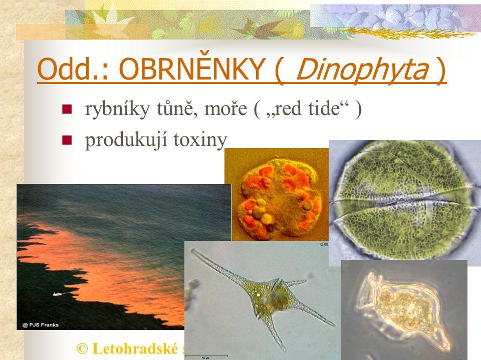 """© Letohradské soukromé gymnázium o.p.s. Odd.: OBRNĚNKY ( Dinophyta ) rybníky tůně, moře ( """"red tide"""" ) produkují toxiny"""