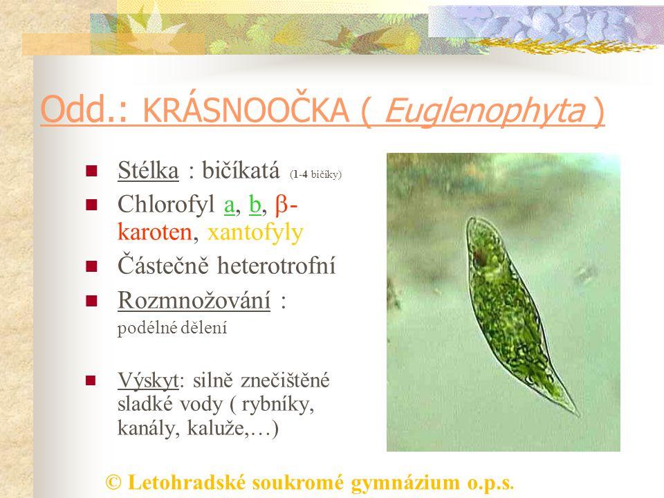 © Letohradské soukromé gymnázium o.p.s. Odd.: KRÁSNOOČKA ( Euglenophyta ) Stélka : bičíkatá (1-4 bičíky) Chlorofyl a, b,  - karoten, xantofyly Částeč