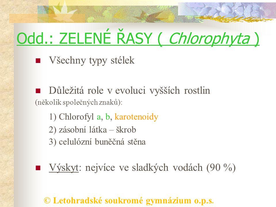 © Letohradské soukromé gymnázium o.p.s. Odd.: ZELENÉ ŘASY ( Chlorophyta ) Všechny typy stélek Důležitá role v evoluci vyšších rostlin (několik společn