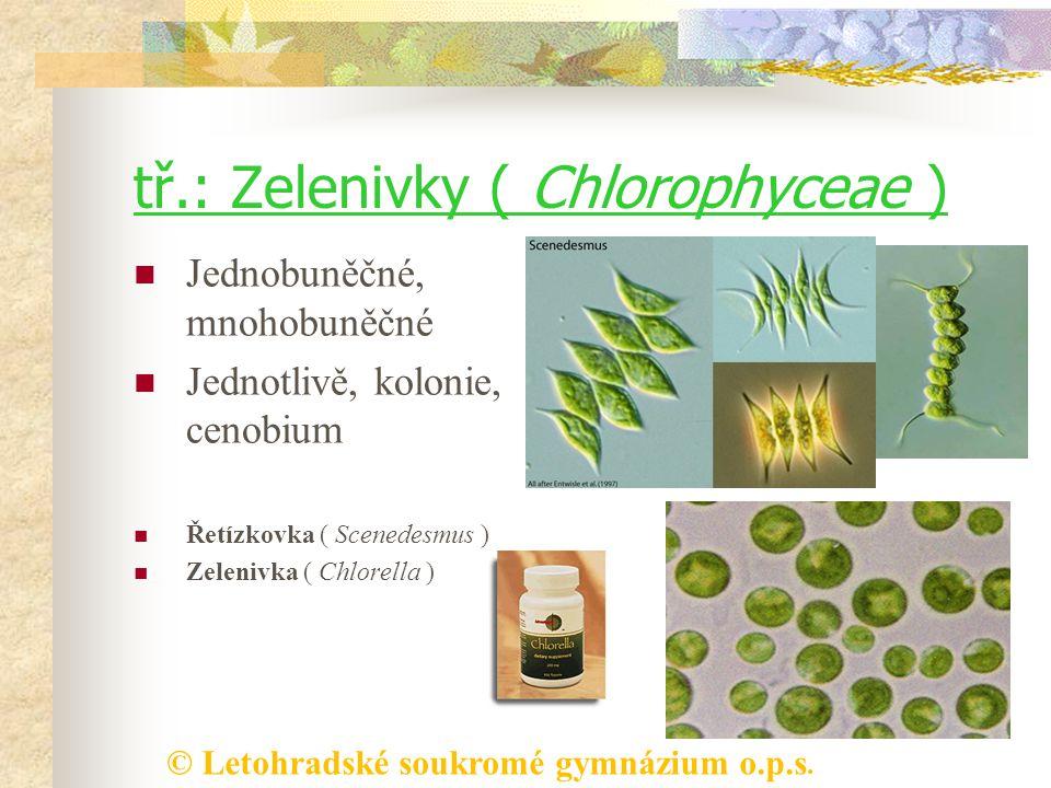 © Letohradské soukromé gymnázium o.p.s. tř.: Zelenivky ( Chlorophyceae ) Jednobuněčné, mnohobuněčné Jednotlivě, kolonie, cenobium Řetízkovka ( Scenede