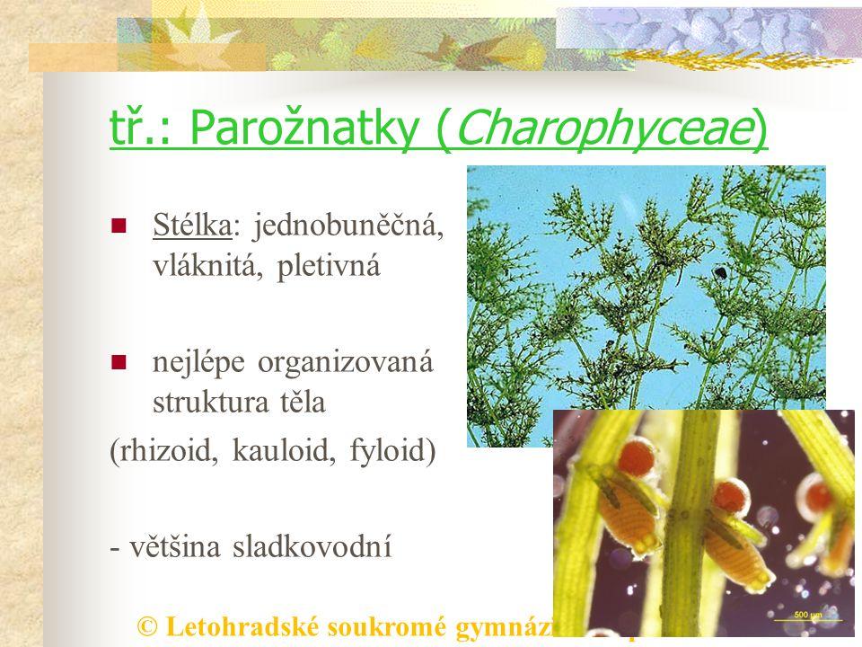 © Letohradské soukromé gymnázium o.p.s. tř.: Parožnatky (Charophyceae) Stélka: jednobuněčná, vláknitá, pletivná nejlépe organizovaná struktura těla (r