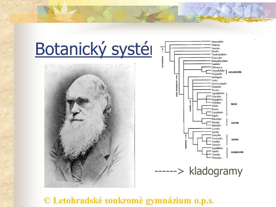 © Letohradské soukromé gymnázium o.p.s. Botanický systém 19. stol. Charles Darwin (vznik druhů přírodním výběrem) vznik fylogenetických systémů ------