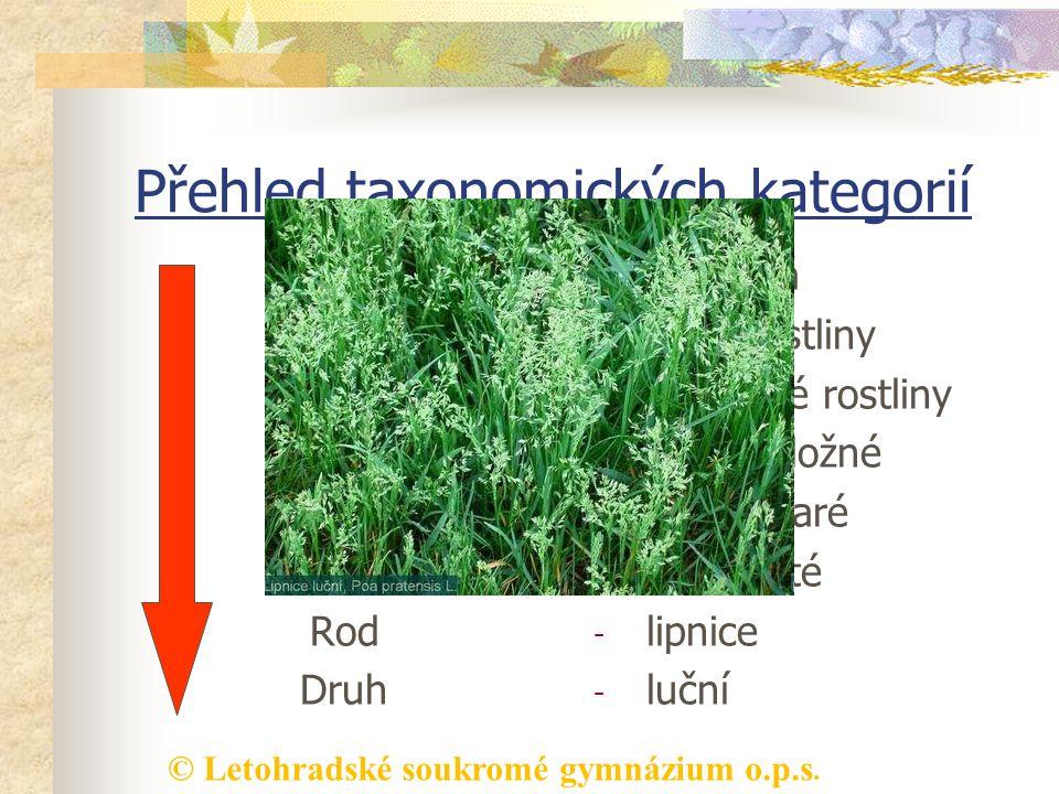 © Letohradské soukromé gymnázium o.p.s. Přehled taxonomických kategorií Říše Podříše Oddělení Třída Řád Čeleď Rod Druh - rostlinná - vyšší rostliny -