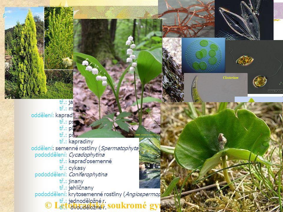 © Letohradské soukromé gymnázium o.p.s. ŘÍŠE: rostlinná (Plantae) podříše: nižší rostliny oddělení: červené řasy, ruduchy (Rhodophyta) oddělení: hnědé