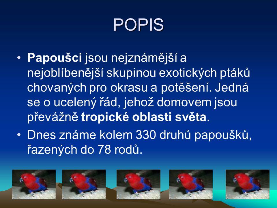 POPIS Papoušci jsou nejznámější a nejoblíbenější skupinou exotických ptáků chovaných pro okrasu a potěšení. Jedná se o ucelený řád, jehož domovem jsou