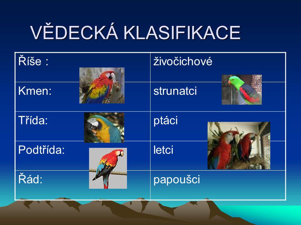 ČELEDI Papoušky dělíme do tří skupin: LOROVITÍ KAKADUOVITÍ PAPOUŠKOVITÍ