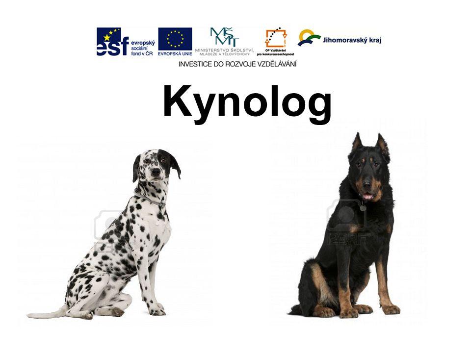 Kynolog