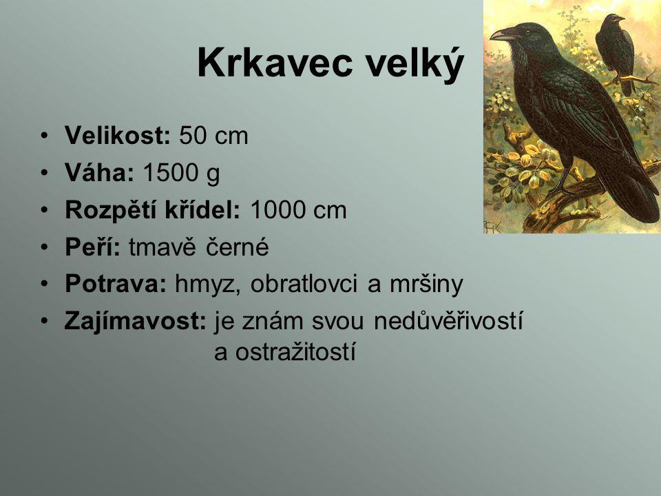 Havran polní Velikost: 45 – 47 cm Váha: 200 – 625 g Rozpětí křídel: 81 – 94 cm Peří: černé Potrava: hmyz, ovoce a menší savce Zajímavost: jeden z nejp