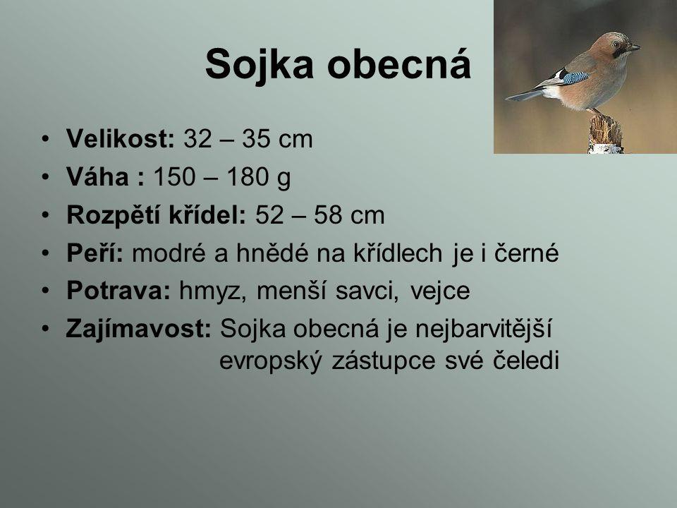 Krkavec velký Velikost: 50 cm Váha: 1500 g Rozpětí křídel: 1000 cm Peří: tmavě černé Potrava: hmyz, obratlovci a mršiny Zajímavost: je znám svou nedův