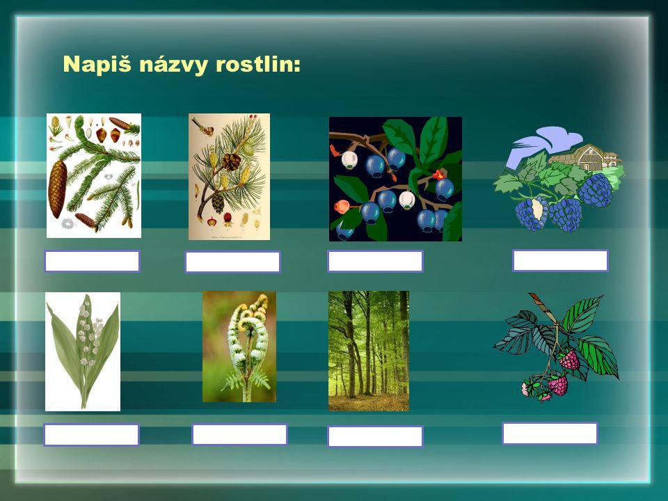 Napiš názvy rostlin: