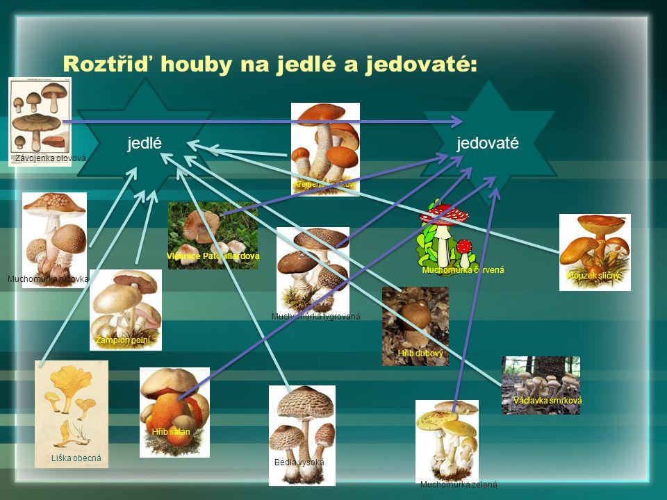 Roztřiď houby na jedlé a jedovaté: jedléjedovaté Liška obecná Hřib dubový Žampion polní Křemenáč osikový Václavka smrková Muchomůrka růžovka Bedla vys