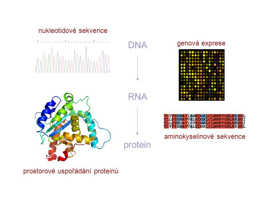 DNA RNA protein nukleotidové sekvence genová exprese aminokyselinové sekvence prostorové uspořádání proteinů