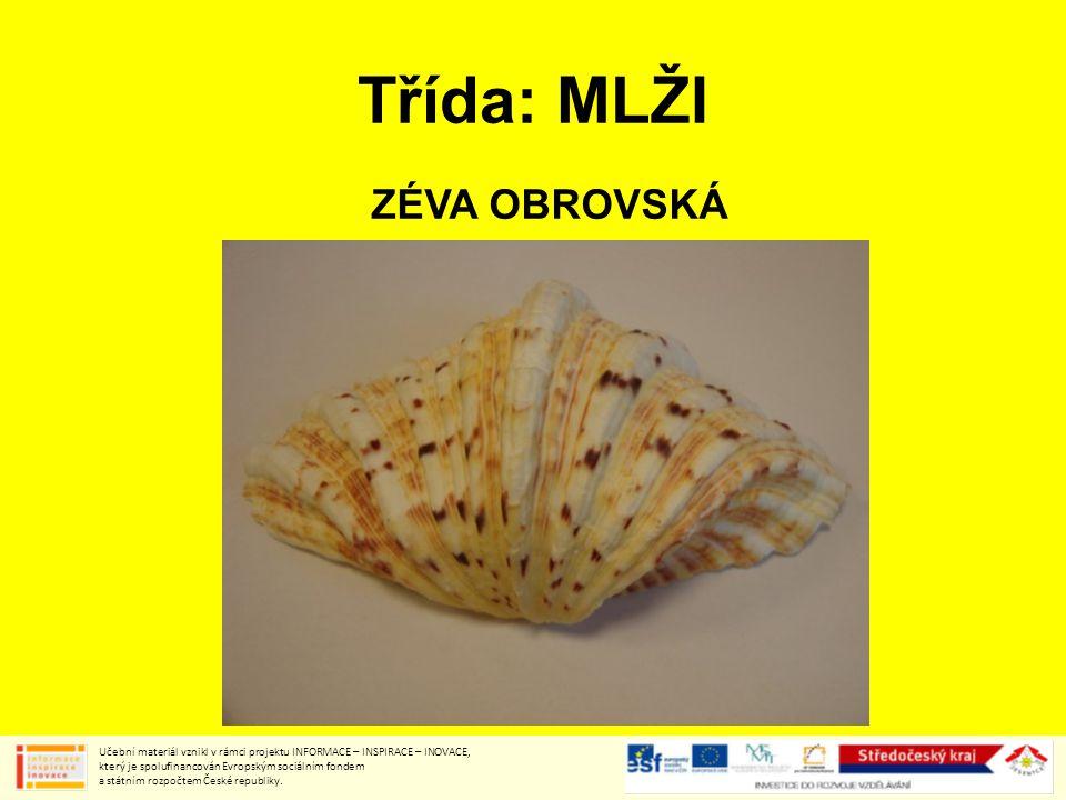 Třída: MLŽI ZÉVA OBROVSKÁ Učební materiál vznikl v rámci projektu INFORMACE – INSPIRACE – INOVACE, který je spolufinancován Evropským sociálním fondem a státním rozpočtem České republiky.