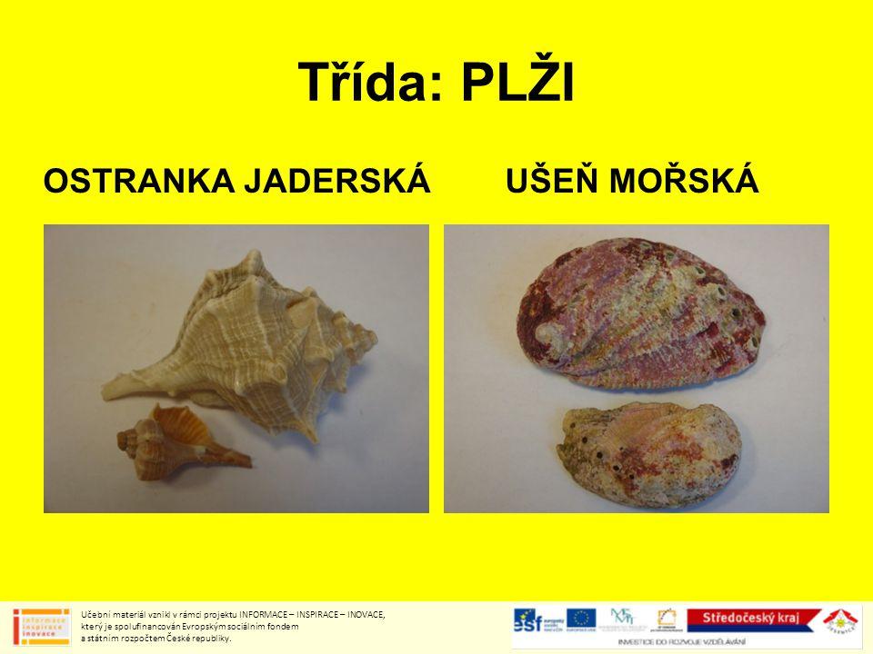 Třída: PLŽI OSTRANKA JADERSKÁUŠEŇ MOŘSKÁ Učební materiál vznikl v rámci projektu INFORMACE – INSPIRACE – INOVACE, který je spolufinancován Evropským sociálním fondem a státním rozpočtem České republiky.