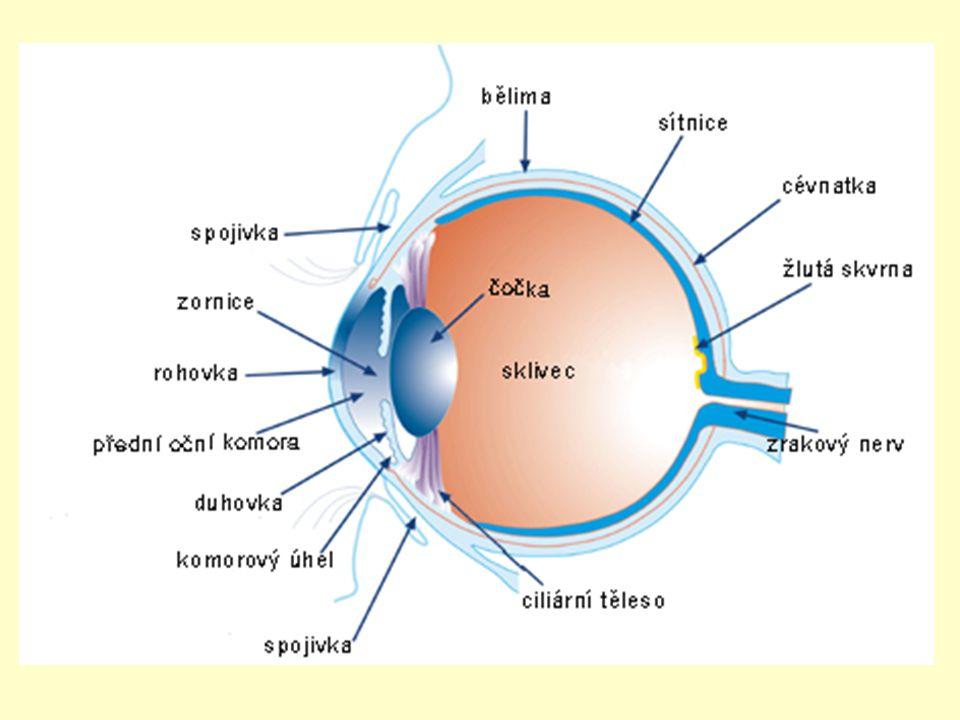 Zrakové ústrojí Oční koule – stavba oka: na povrchu – BĚLIMA = bílý vazivový obal oka → tvar vpředu ROHOVKA - průhledná vzadu CÉVNATKU – prokrvená, výživa oka tvoří: ŘASNATÉ TĚLÍSKO zakřivování čočky → zaostřování= akomodace DUHOVKU - uprostřed – ZORNICE – regulace množství světla obsahuje pigment mezi rohovkou a oční čočkou – PŘEDNÍ OČNÍ KOMORA – vyplněna komorovou vodou