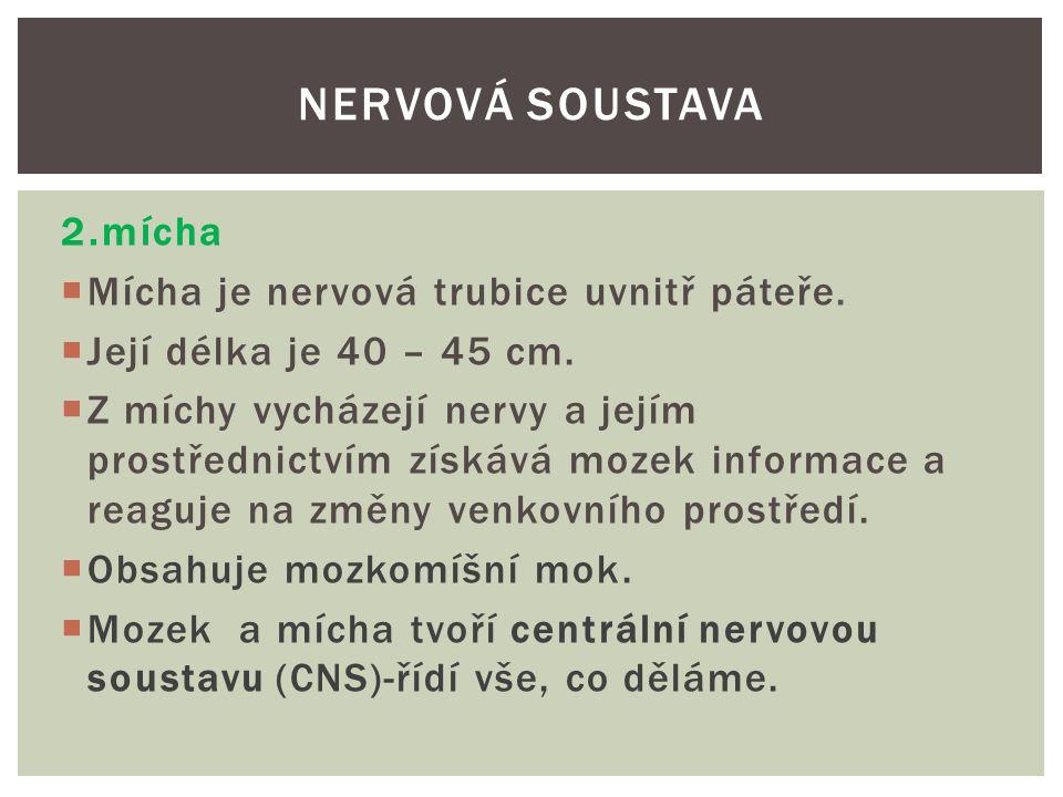 Mícha umístěná v páteři NERVOVÁ SOUSTAVA