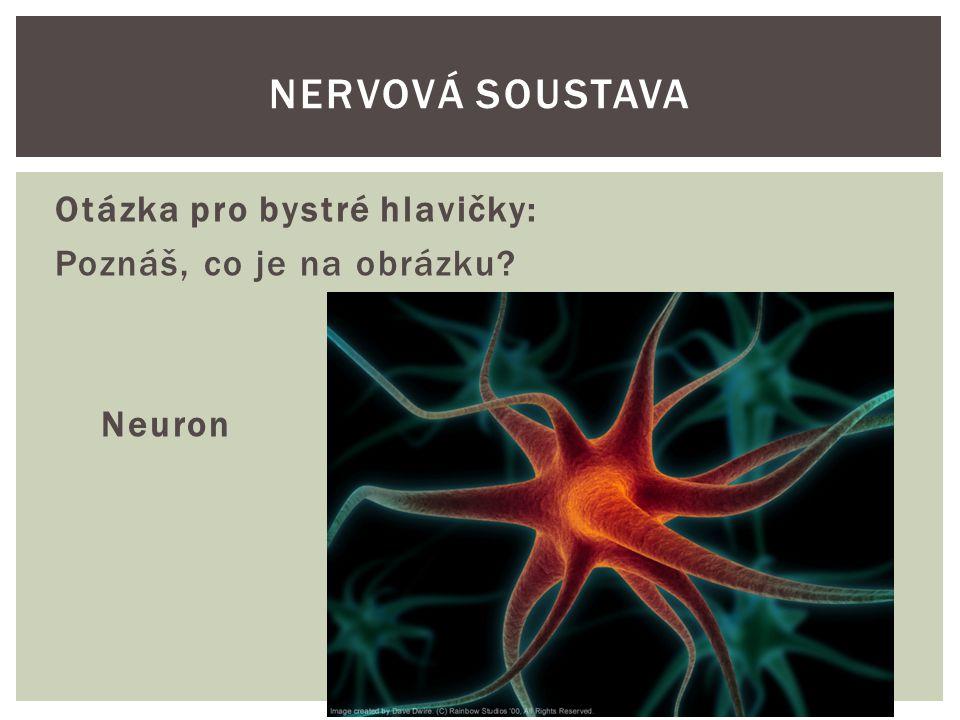 Zápis:  Nervová soustava je řídící soustava, která přímo i nepřímo ovládá činnost všech orgánů.