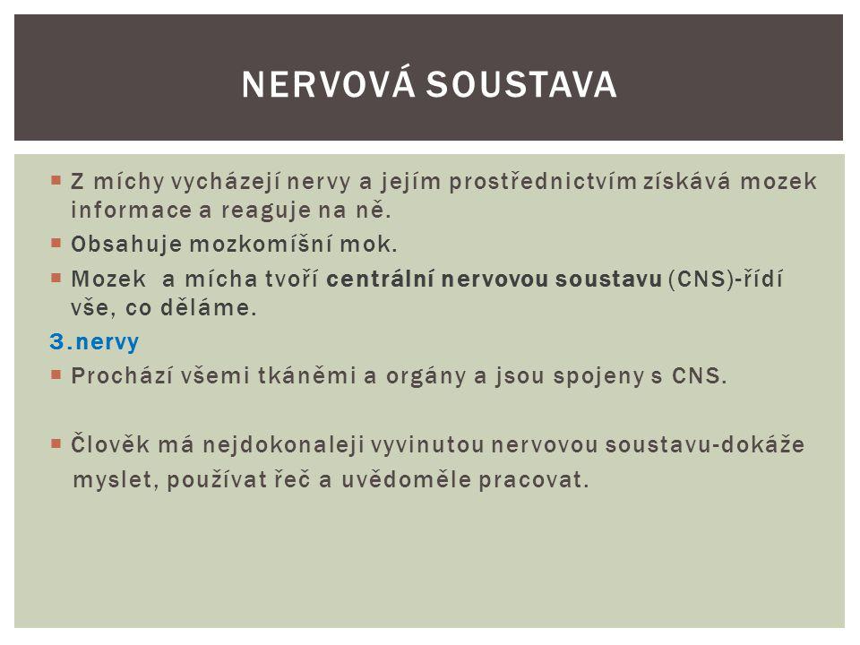 Prameny:  https://docs.google.com/viewer?a=v&q=cache:C U6nsvOToRwJ:skorda.wz.cz/bio/bio17.doc+nervov %C3%A1+soustava+%C4%8Dlov%C4%9Bka&hl=c s&gl=cz&pid=bl&srcid=ADGEEShUkH7KNWXeo1b ICFbyCJz5t0ql99oQiOSYdPL0yAcHe0q5gfDtJgJDFz apJU8ZmA- Cy8HV25NE3Fi9ndmnNS7UVUWKRDic4lA_8AiRkc XmYZKOGhYDUAT17aCtKHQksBG0tR1M&sig=AHI EtbS70f__EXM5VqtUi9GrUYKmwFY1NQ https://docs.google.com/viewer?a=v&q=cache:C U6nsvOToRwJ:skorda.wz.cz/bio/bio17.doc+nervov %C3%A1+soustava+%C4%8Dlov%C4%9Bka&hl=c s&gl=cz&pid=bl&srcid=ADGEEShUkH7KNWXeo1b ICFbyCJz5t0ql99oQiOSYdPL0yAcHe0q5gfDtJgJDFz apJU8ZmA- Cy8HV25NE3Fi9ndmnNS7UVUWKRDic4lA_8AiRkc XmYZKOGhYDUAT17aCtKHQksBG0tR1M&sig=AHI EtbS70f__EXM5VqtUi9GrUYKmwFY1NQ  http://cs.wikipedia.org/wiki/M%C3%ADcha http://cs.wikipedia.org/wiki/M%C3%ADcha  http://cs.wikipedia.org/wiki/Centr%C3%A1ln%C3 %AD_nervov%C3%A1_soustava http://cs.wikipedia.org/wiki/Centr%C3%A1ln%C3 %AD_nervov%C3%A1_soustava Vše platné k 25.6.2012 NERVOVÁ SOUSTAVA