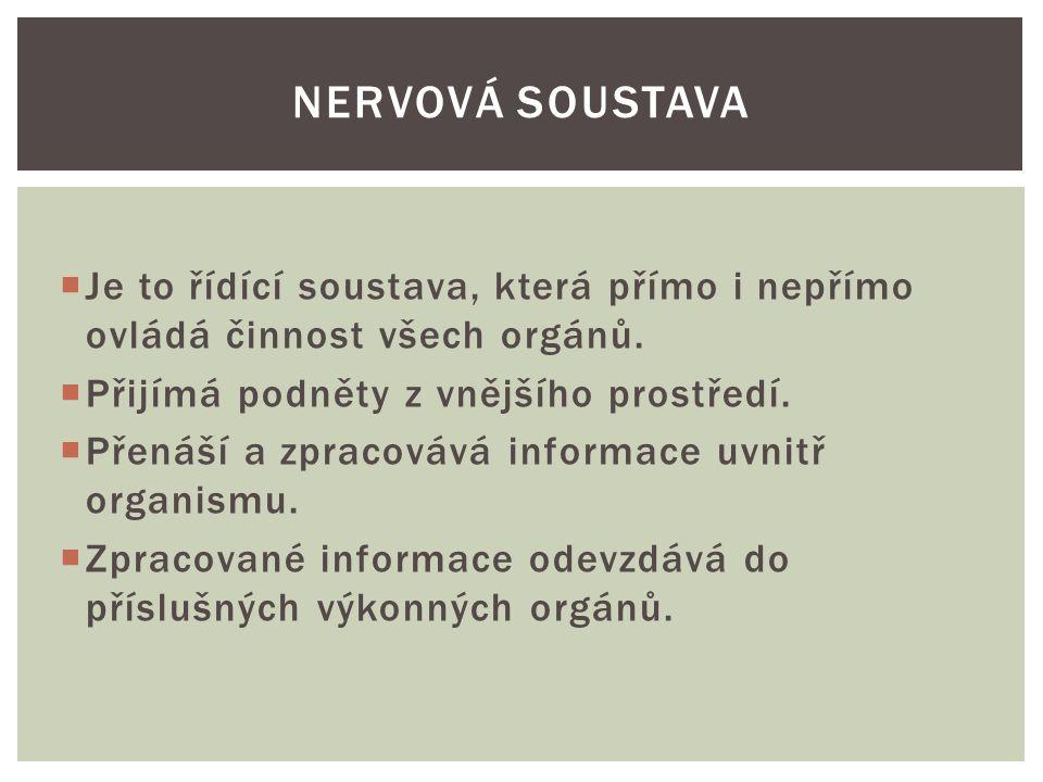 Nervovou soustavu tvoří: 1.mozek  Mozek se nachází v lebce, je tvořen dvěma polokoulemi-hemisférami.
