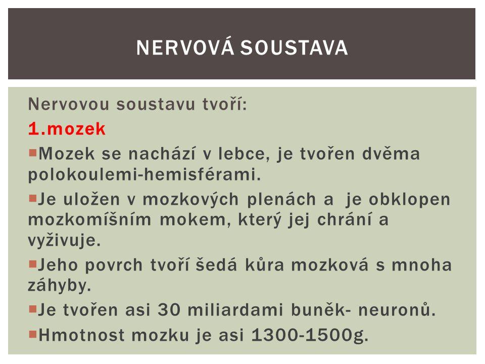 Mozek NERVOVÁ SOUSTAVA