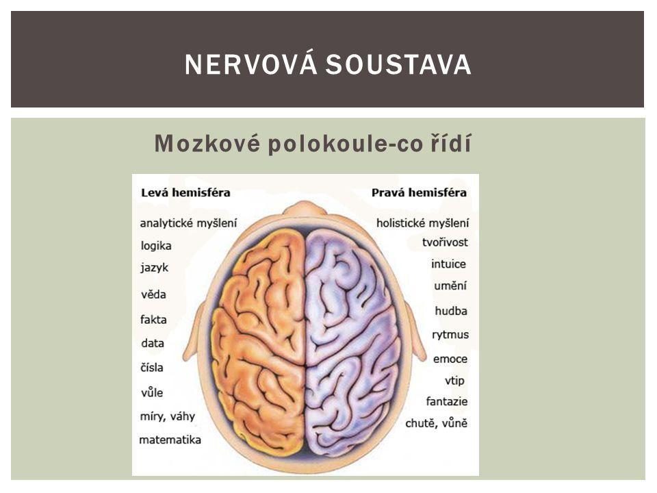 Neuron NERVOVÁ SOUSTAVA
