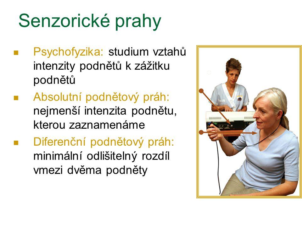 Senzorické prahy Psychofyzika: studium vztahů intenzity podnětů k zážitku podnětů Absolutní podnětový práh: nejmenší intenzita podnětu, kterou zazname