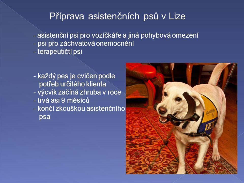 Příprava asistenčních psů v Lize - asistenční psi pro vozíčkáře a jiná pohybová omezení - psi pro záchvatová onemocnění - terapeutičtí psi - každý pes