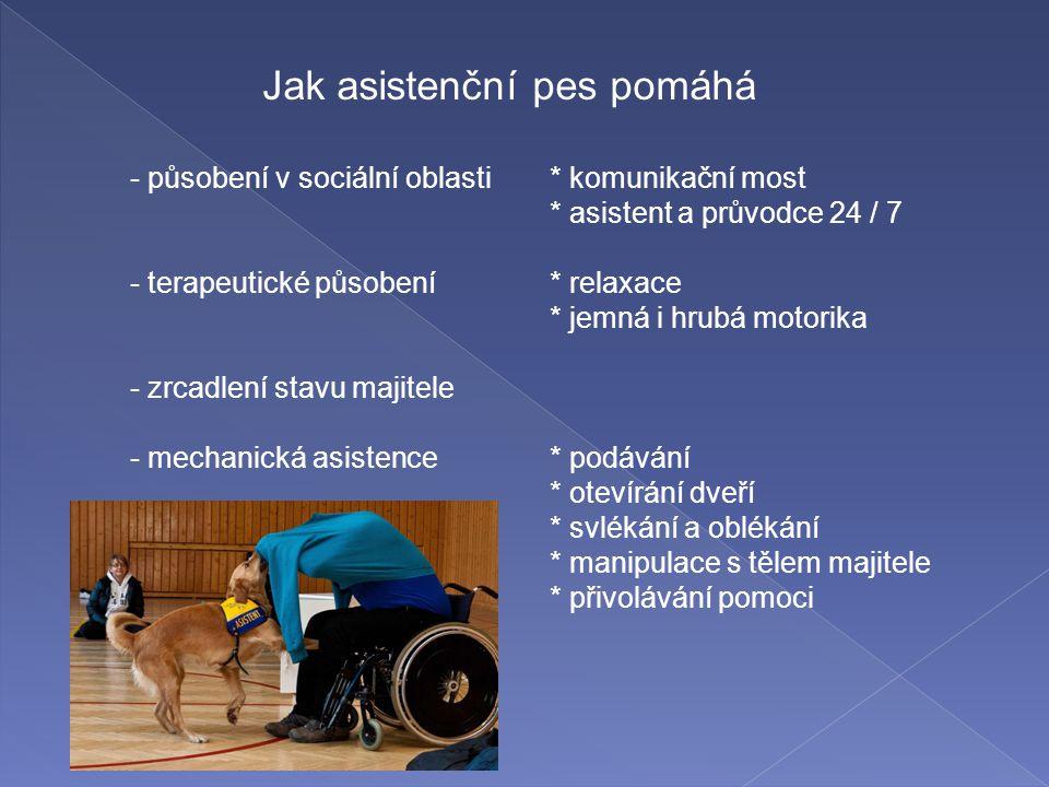 - působení v sociální oblasti* komunikační most * asistent a průvodce 24 / 7 - terapeutické působení* relaxace * jemná i hrubá motorika - zrcadlení st