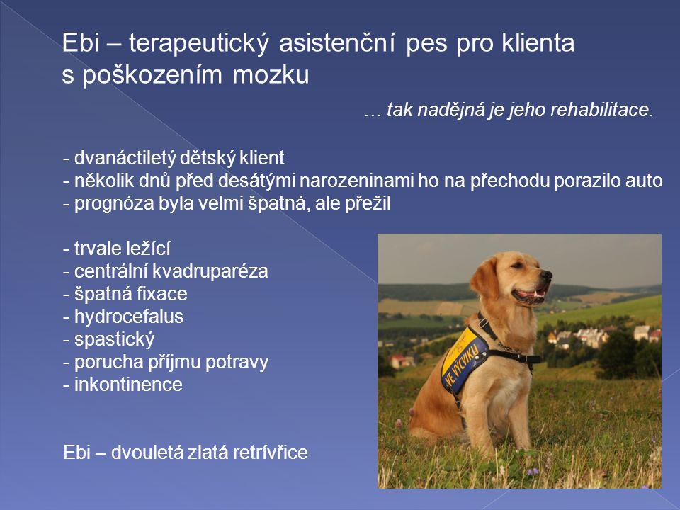 Ebi – terapeutický asistenční pes pro klienta s poškozením mozku … tak nadějná je jeho rehabilitace. - dvanáctiletý dětský klient - několik dnů před d
