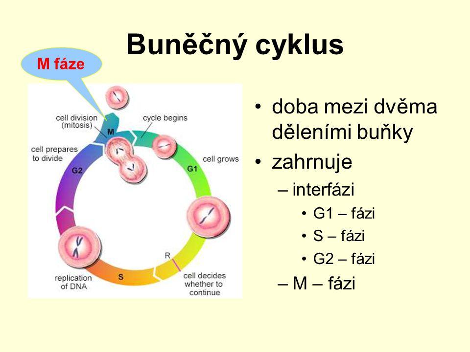 Dělení jádra zachovává kontinuitu genetické informace jsou koordinované změny –na chromozomech –na jaderném obalu –na mikrotubulárním aparátu buňky rozlišujeme –mitózu = nepřímé jaderné dělení –meiózu = redukční jaderné dělení
