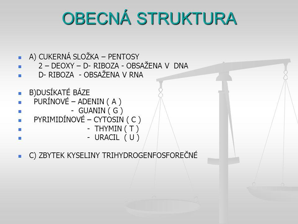 OBECNÁ STRUKTURA A) CUKERNÁ SLOŽKA – PENTOSY A) CUKERNÁ SLOŽKA – PENTOSY 2 – DEOXY – D- RIBOZA - OBSAŽENA V DNA 2 – DEOXY – D- RIBOZA - OBSAŽENA V DNA