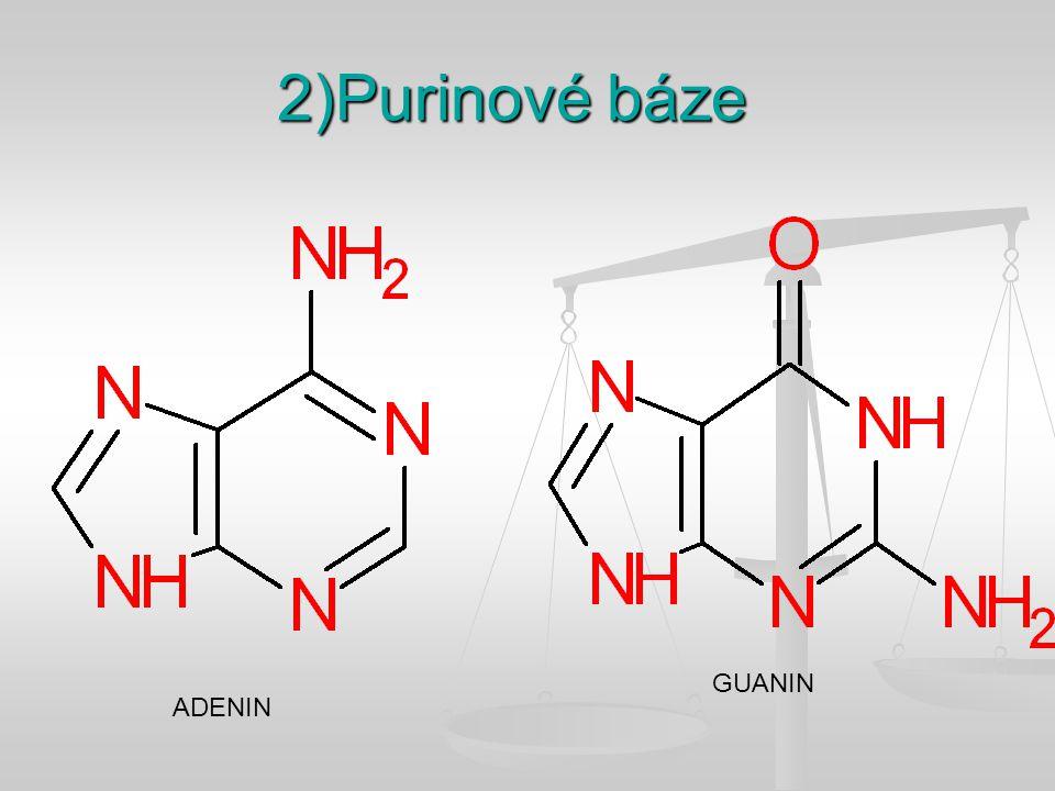 2)Purinové báze ADENIN GUANIN