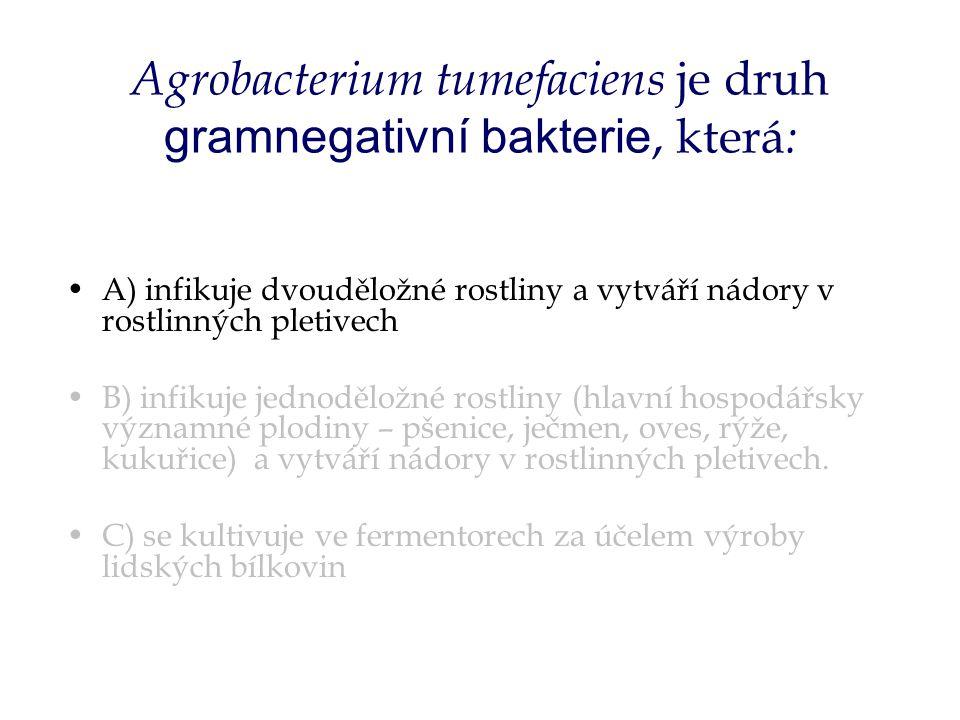 Agrobacterium tumefaciens je druh gramnegativní bakterie, která : A) infikuje dvouděložné rostliny a vytváří nádory v rostlinných pletivech B) infikuje jednoděložné rostliny (hlavní hospodářsky významné plodiny – pšenice, ječmen, oves, rýže, kukuřice) a vytváří nádory v rostlinných pletivech.
