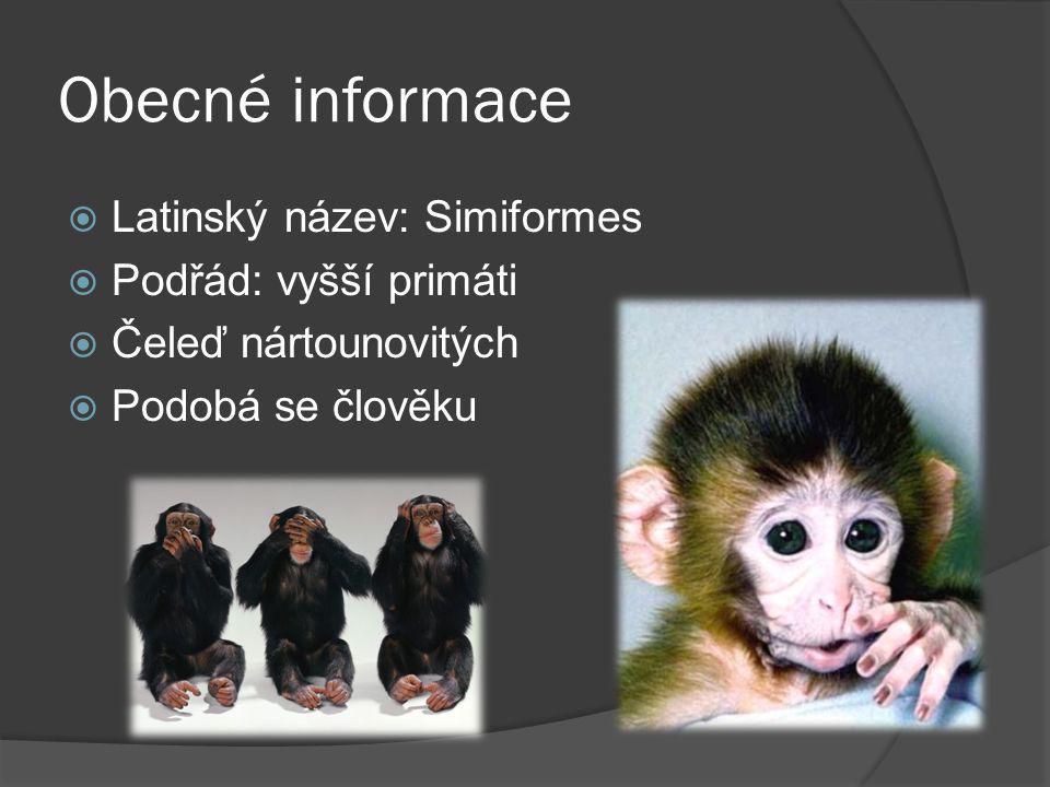 Obecné informace  Latinský název: Simiformes  Podřád: vyšší primáti  Čeleď nártounovitých  Podobá se člověku