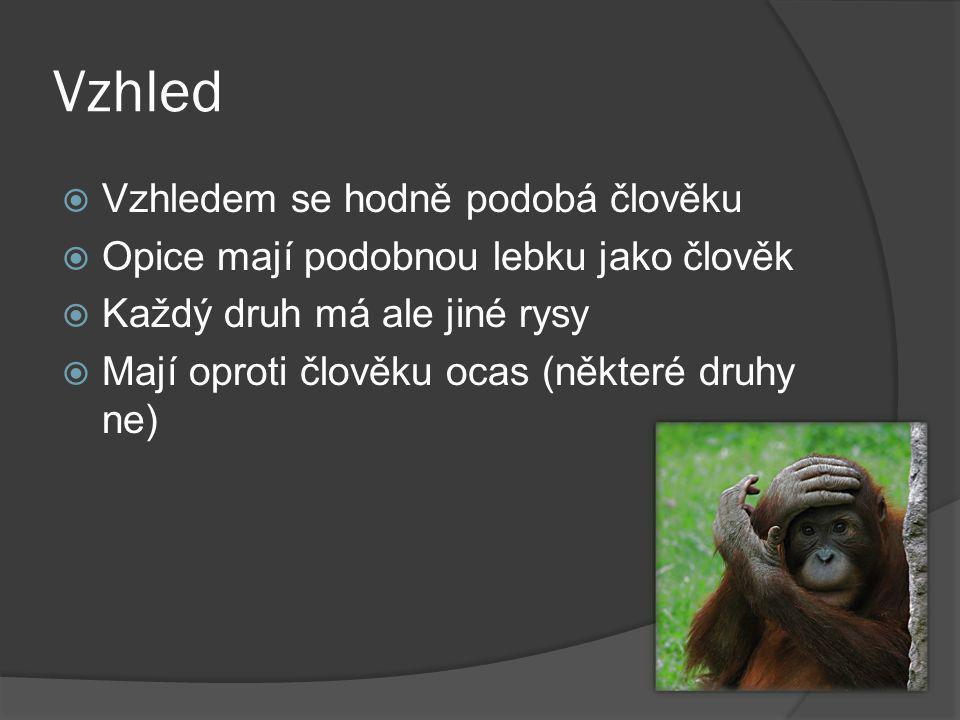 Vzhled  Vzhledem se hodně podobá člověku  Opice mají podobnou lebku jako člověk  Každý druh má ale jiné rysy  Mají oproti člověku ocas (některé druhy ne)