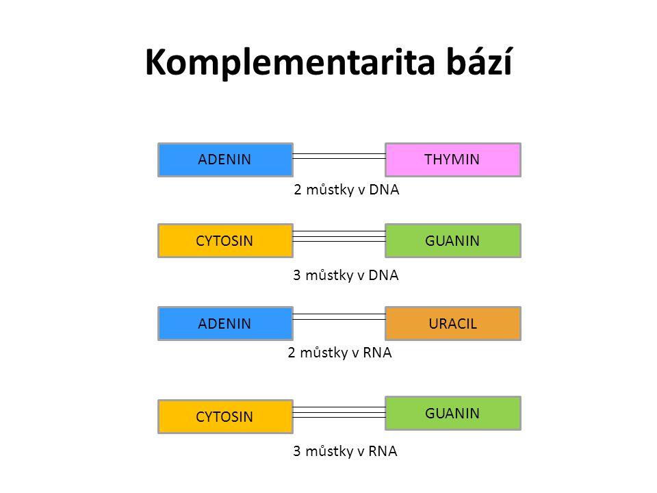 Komplementarita bází ADENIN CYTOSIN THYMIN GUANIN URACIL 2 můstky v DNA 3 můstky v DNA 2 můstky v RNA 3 můstky v RNA