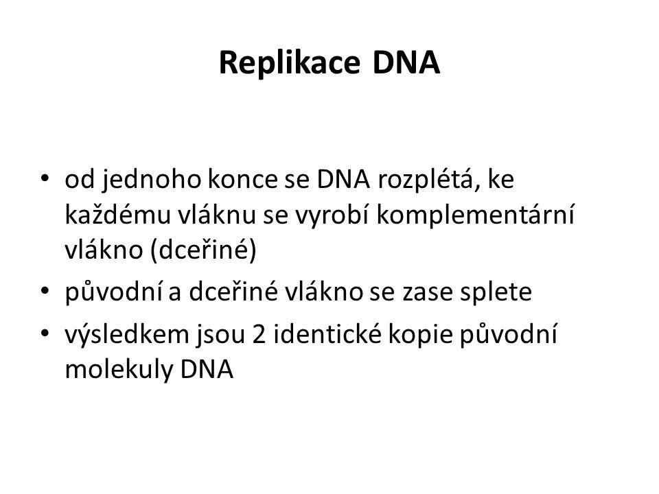 Replikace DNA od jednoho konce se DNA rozplétá, ke každému vláknu se vyrobí komplementární vlákno (dceřiné) původní a dceřiné vlákno se zase splete vý