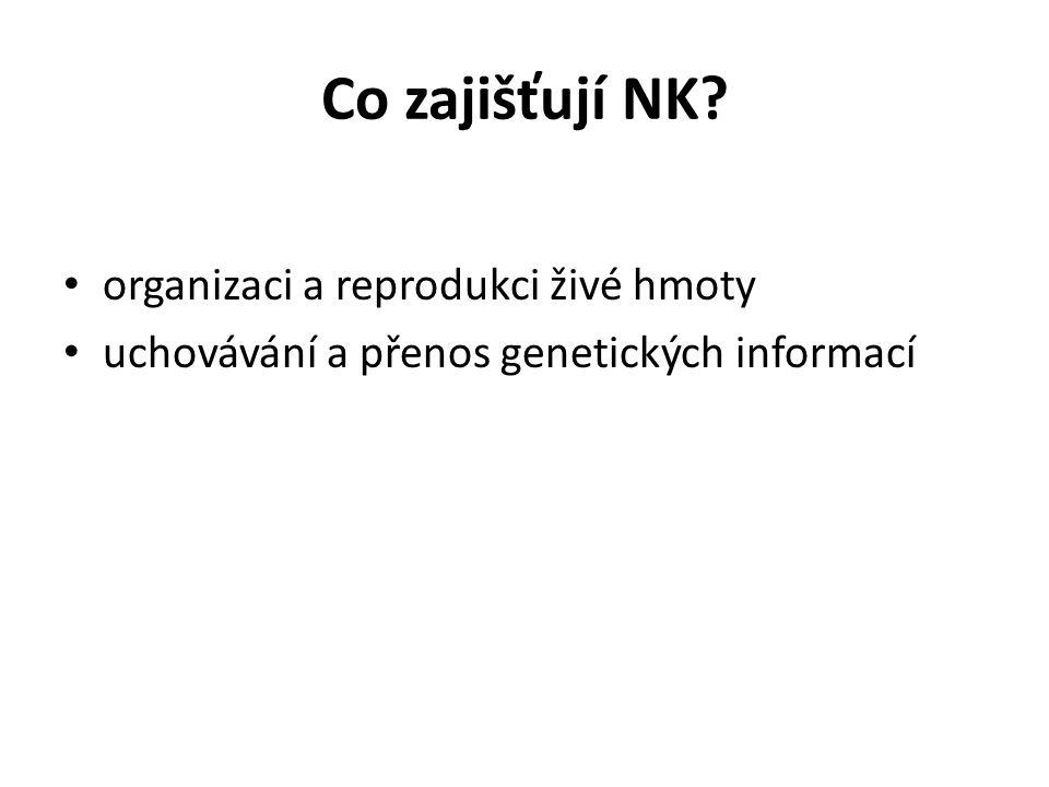 Co zajišťují NK? organizaci a reprodukci živé hmoty uchovávání a přenos genetických informací