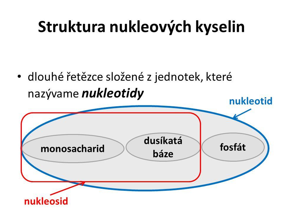 Struktura nukleových kyselin dlouhé řetězce složené z jednotek, které nazývame nukleotidy dusíkatá báze monosacharid fosfát nukleotid nukleosid